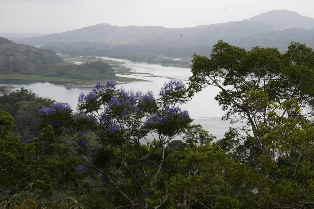 Über den Wipfeln des Regenwaldes