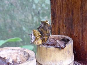im Schmetterlinghaus