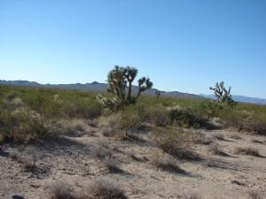Mohave Wüste