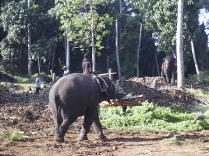 2005-11 Sri Lanka 00046