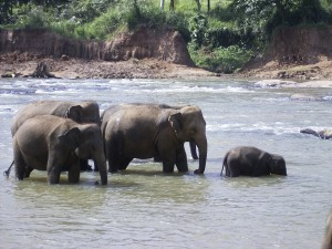 2005-11 Sri Lanka 00075