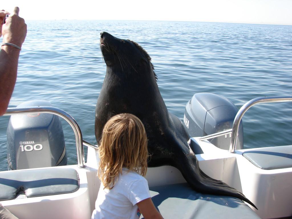 Seehund an Bord