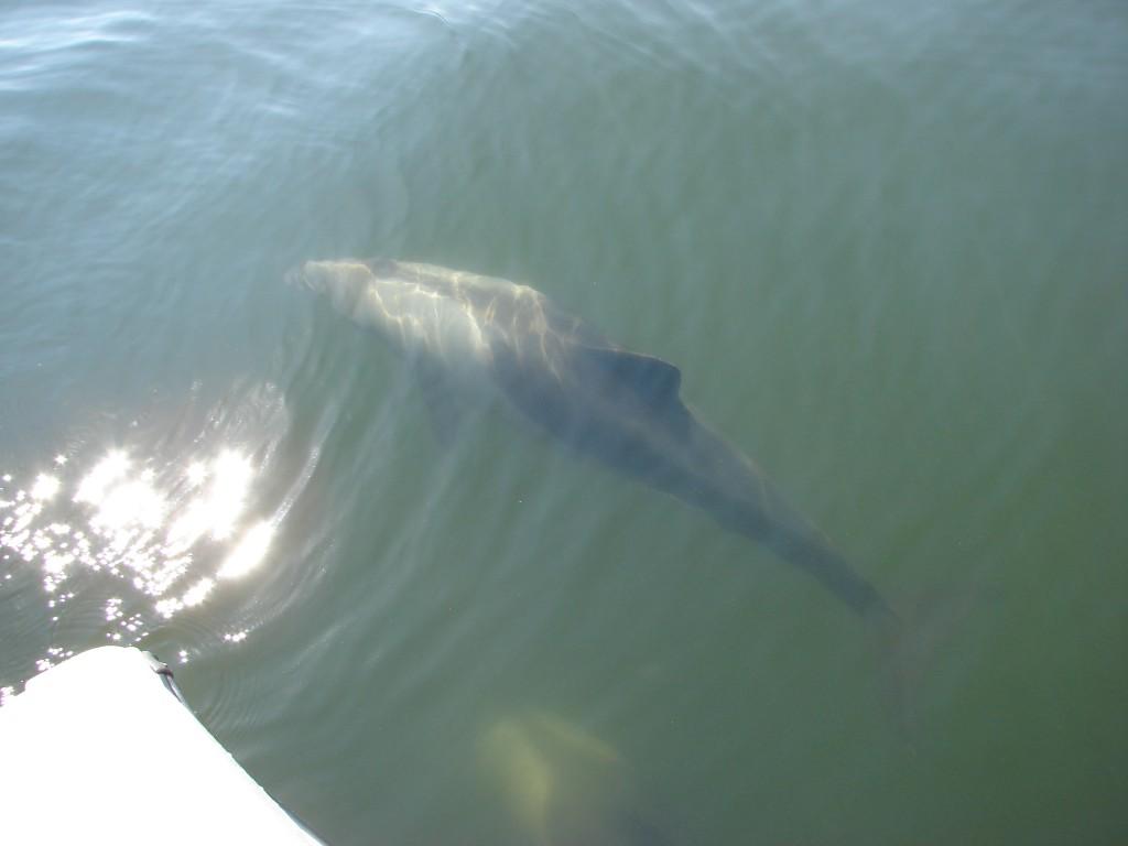 Delfine in der Walvis Bay. Kennt jemand diese Art?