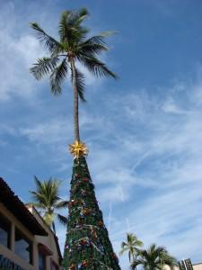 Weihnachtspalme in Puerto Vallarta