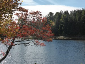 im Rockefeller Park am Acadia National Park