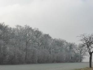 Einsamkeit in Sachsen-Anhalt