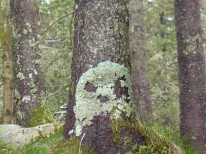 Totenkopf aus Moos /mossy skull