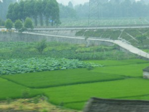 Plantations in Sichuan