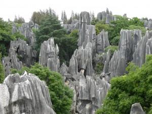 Steinwald / Stone Forest