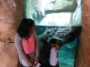 Flusspferd im Zoo Hannover