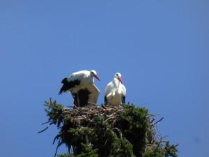 Störche, Vogelpark Walsrode