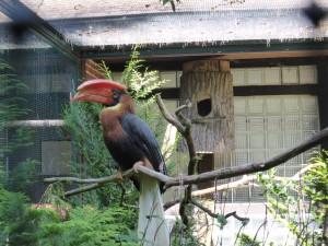 Tukan, Vogelpark Walsrode