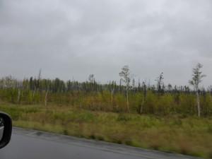 zwischen Denali und Fairbanks
