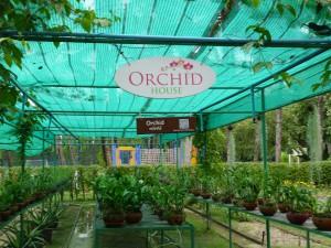 eigene Orchideenzucht im Santiburi