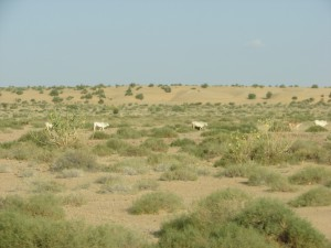 near Jaisalmer