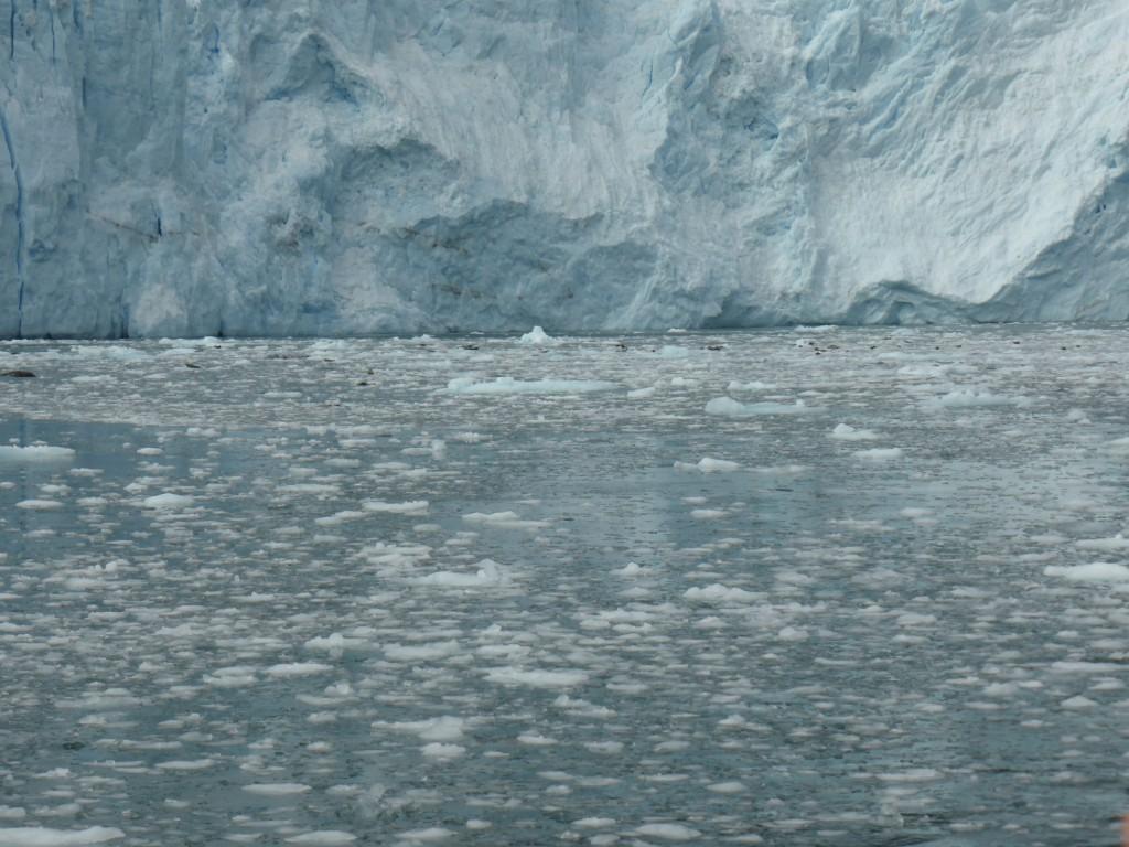 Aialik Gletscher mit Seelöwen