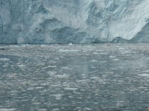 Sea Lions in front of Aialik Glacier