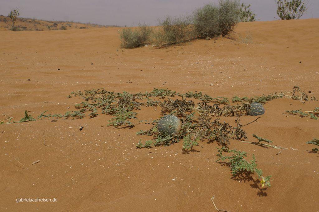 Da sage einer, in der Wüste wächst nichts!