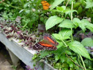 Schmetterling im Hortus Botanicus