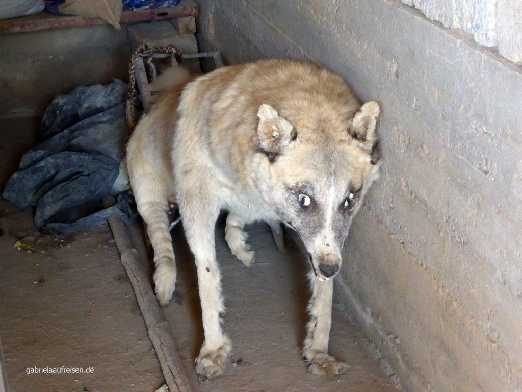 der Wolf lauert uns in der Garage der Weberfamilie auf