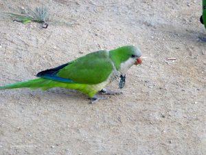 Papagei im Parc de Ciutadella