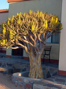 tree at Hammerstein Lodge