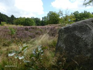 one of these huge stones that the ice age brought from Scandinavia to Germany