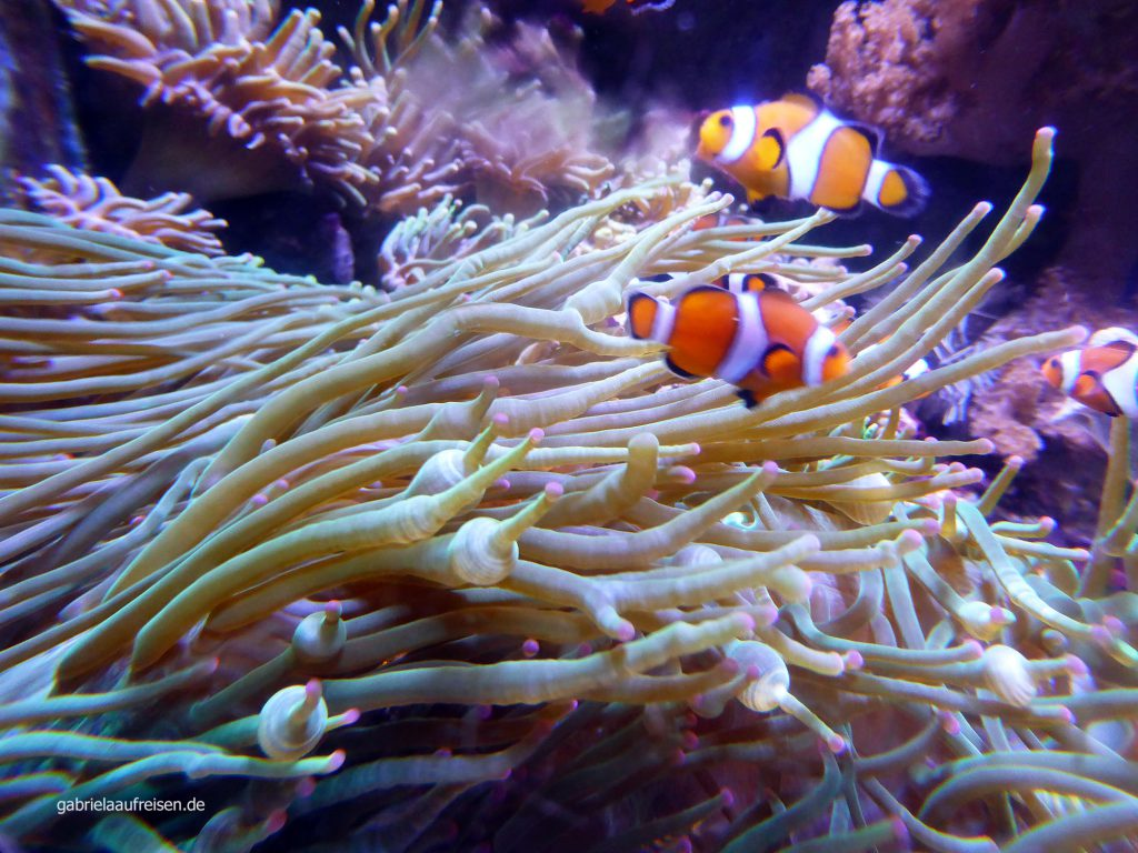 findet Nemo...