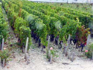 Weinanbaugebiet Médoc