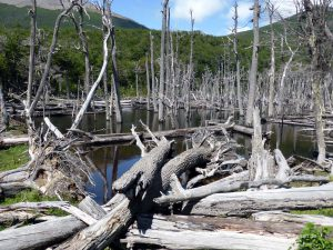 landscape formed by beavers
