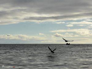 Antarctica, Spert Island, birds