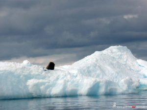 Antarctica, Cierva Cove