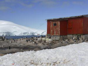 Antarktis, Mikkelsen Harbour, Eselspinguine