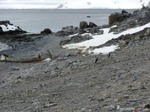 Antarctica, Halfmoon Bay, whaling boat