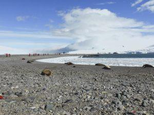 Antarctica, Yankee Harbour, Sea Spirit