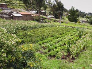 Peru, gardening