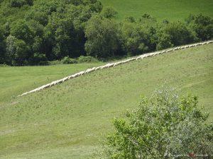 Fattoria Lischeto in Tuscany