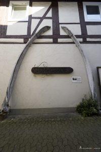 ausgestellte Knochen eines Wales in Gifhorn
