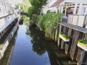 river in Gifhorn