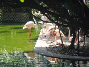 Hongkong Flamingos