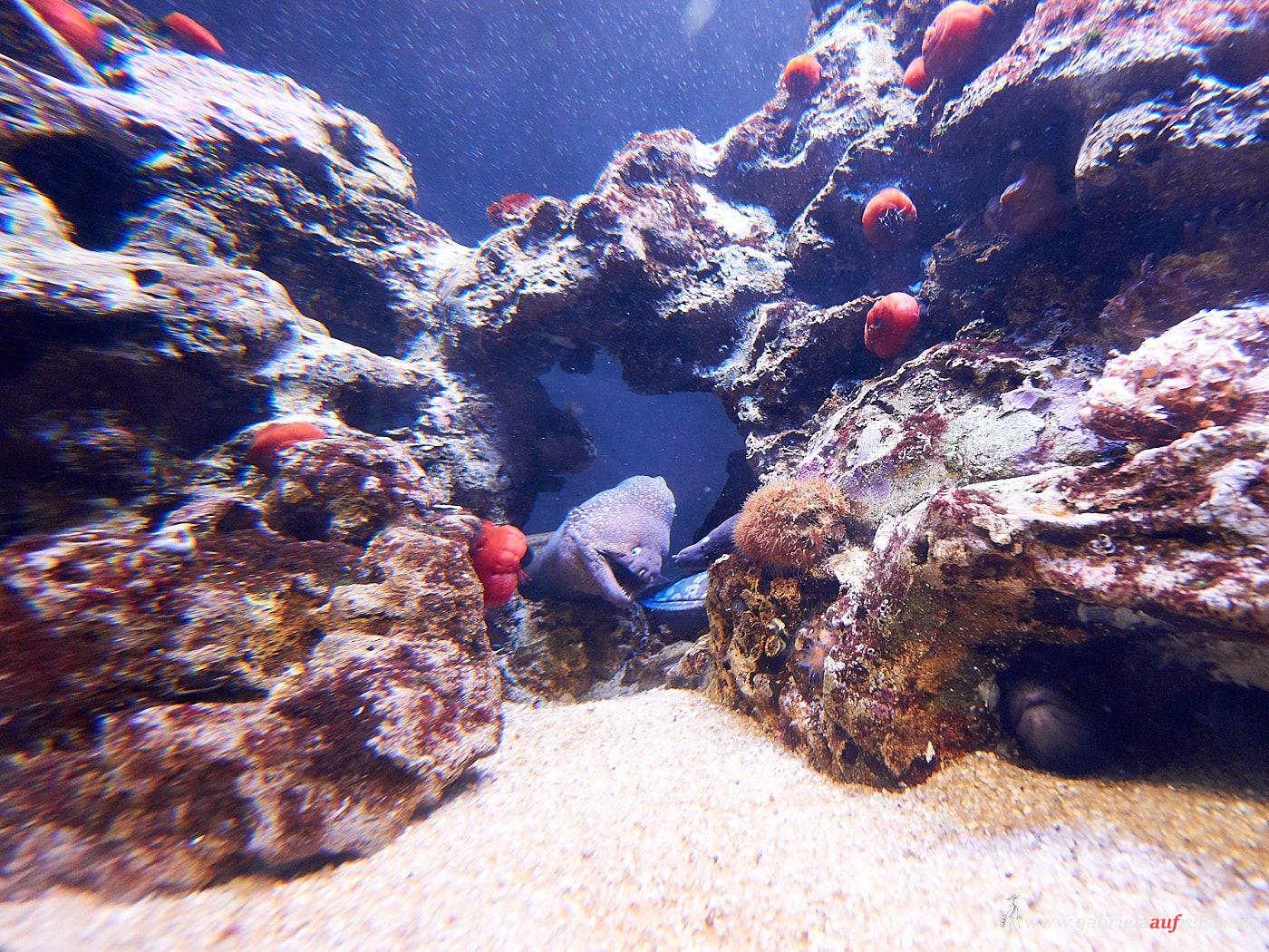 Fische in Palma