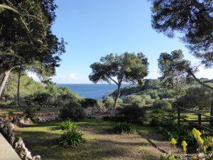 trees on Mallorca