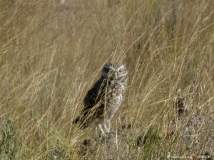 bird at peninsula Valdés