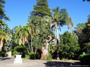 Kapstadt Stadtgarten