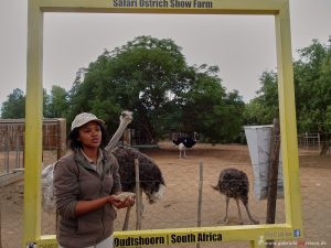 Ostrich Safari