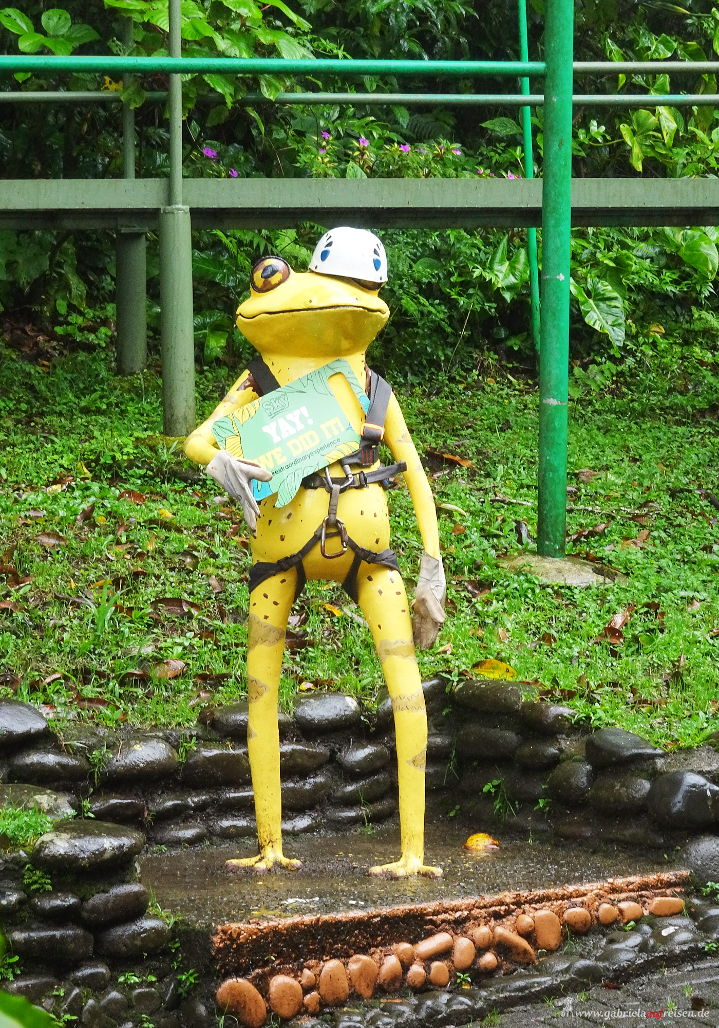 Frosch in Costa Rica