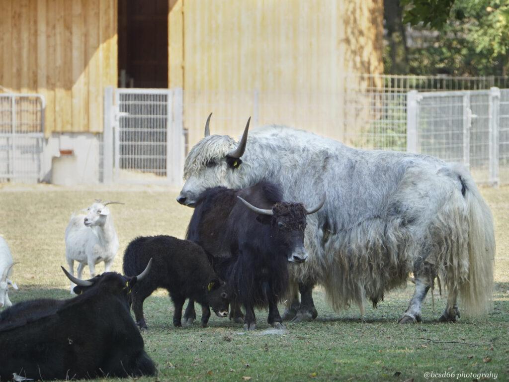 Tiere im Mundenhof
