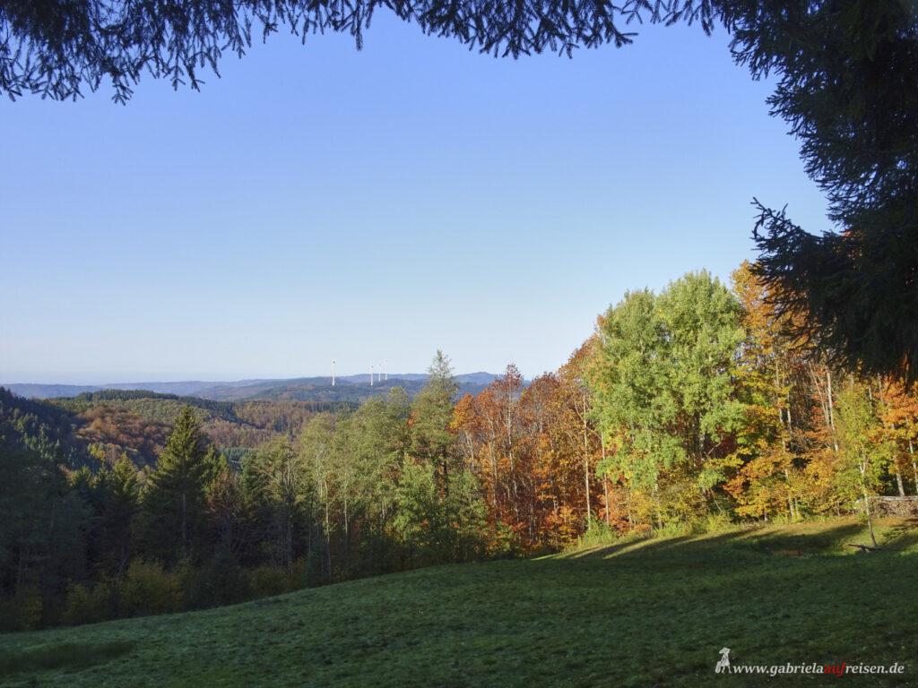 Laubfaerbung-im-Schwarzwald