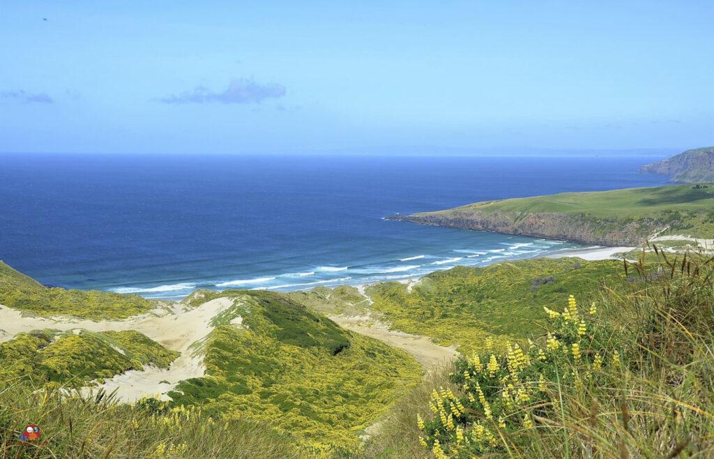 Strand-in-Neuseeland