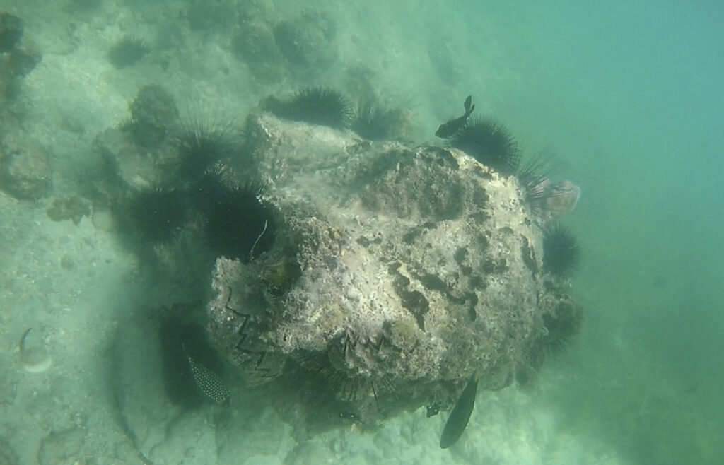 Fische-in-Kenia